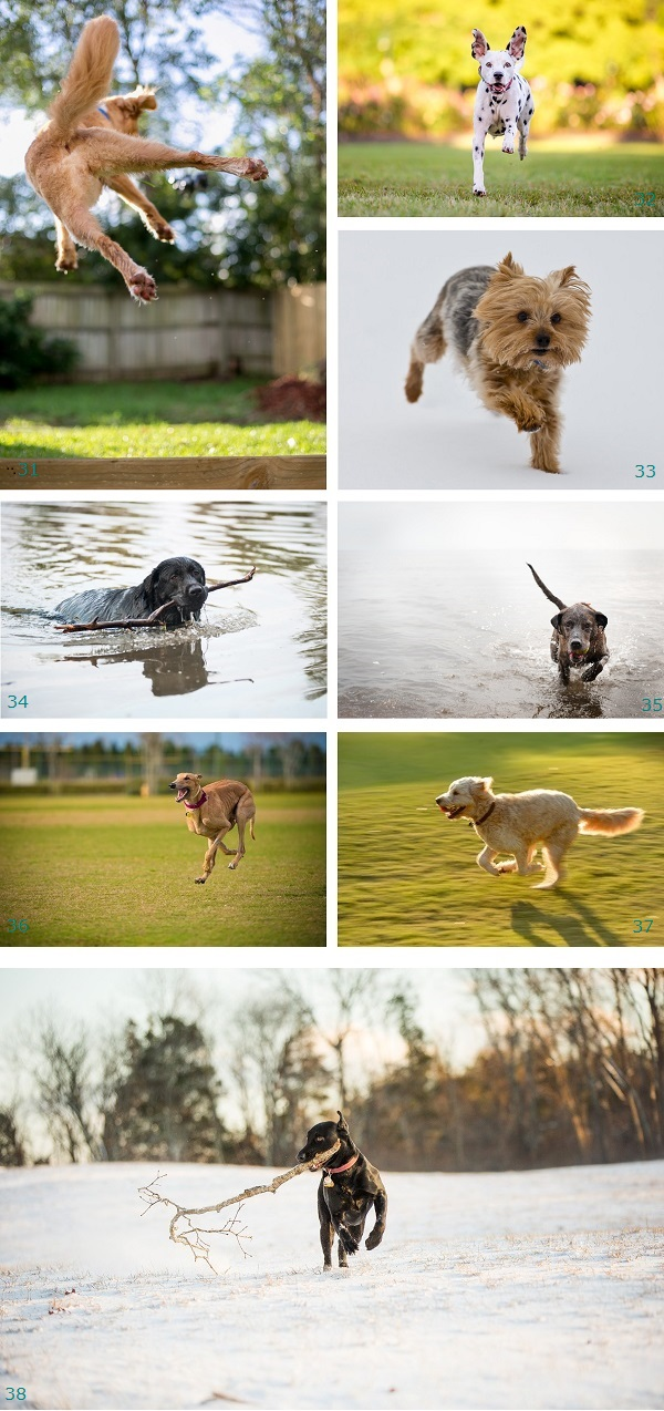 Best Stuntdog nominees: action-shots-of dogs, dogs jumping, playing, swimming, playing fetch