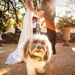 Best-dog-in-wedding, wedding-with-dog