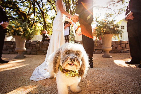 © Laffler Photography |Best-dog-in-wedding, wedding-with-dog