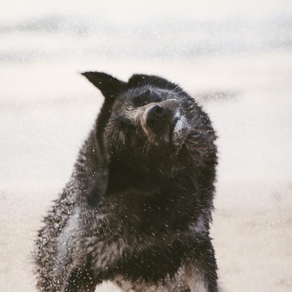 © Bitsa Bernard Photography | dog shaking water, day at the beach, lifestyle pet photography