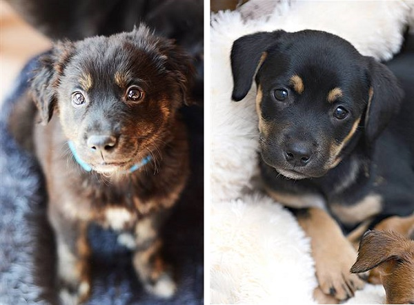 ©  Best Friends Animal Society | Adoptable puppies-Best Friends Society
