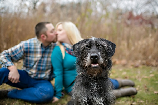 © April Ziegler Photography | Hailey, maternity shoot with dog, Lab, Terrier mixed breed, bearded lady