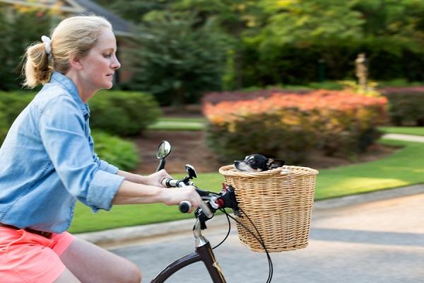 © Cavin Elizabeth Photography  Chihuahua-in-bike-basket2