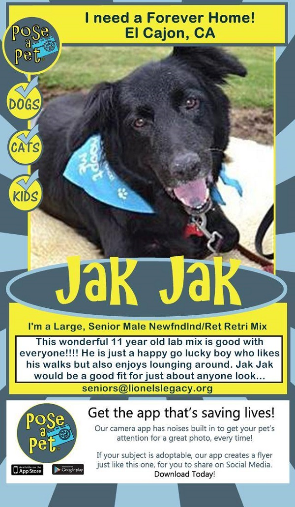 © Lionel's Legacy, Jak Jak-adoptable-senior-dog,
