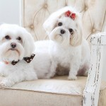 Lacie_Lauree_Photography_IggieSophie-Lifestyle-dog-photography4
