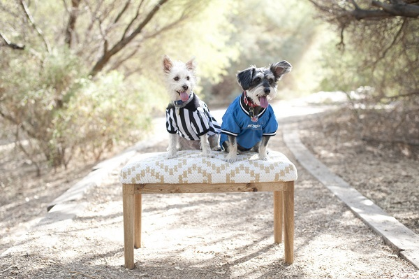 © Lauren Weeks Photography | dogs in ref shirt and football jersey, lifestyle-dog-photography, Detroit Lion fans