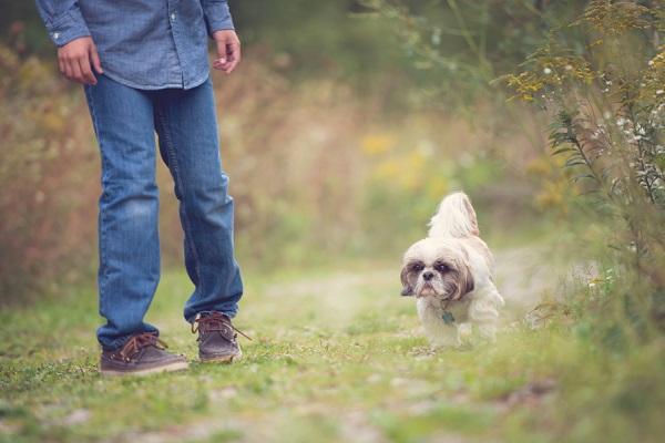© Melissa Avey Photography | small-senior-dog, pet-photography