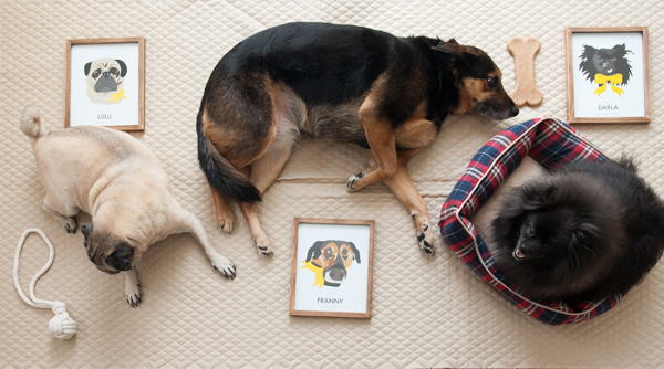 © Alice G Patterson Photography | Syracuse-pet-product -photography, custom-pet-portraits