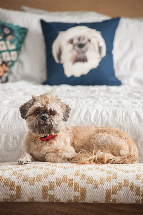 © Alice G Patterson Photography |custom-pet-illustrations, throw pillow