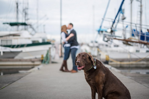© Salt & Pine Photography | Chocolate Lab,  Seattle dock engagement photos