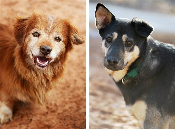 ©  Best Friends Animal Society | Adoptable-dogs-Best Friends Animal Sanctuary