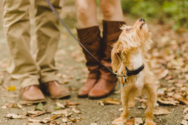 © Maria Sharp Photography | Cuyahoga Valley National Park autumn engagement session with dog