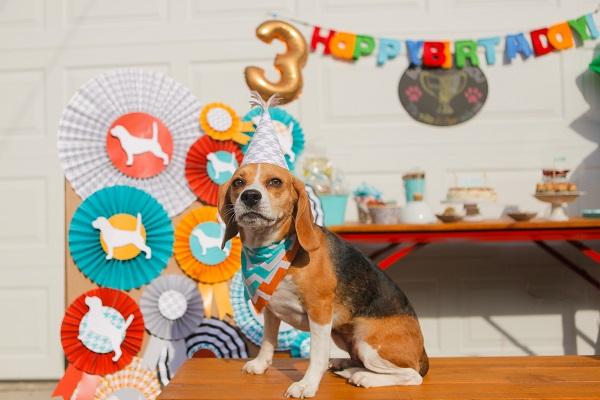 © Andrea Takeoka Photography | Beagle-birthday-party, best-in-show-theme