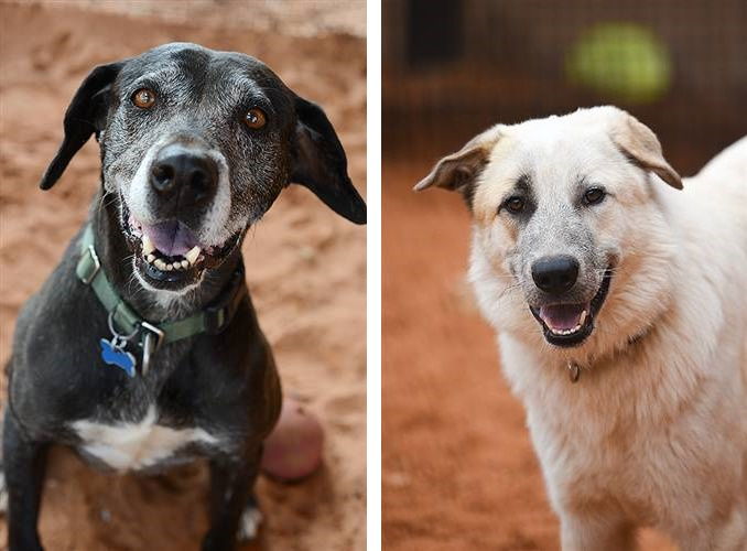 Adoptable dogs from Best Friends Animal Society, 4 Tips to Help Your New Dog Adjust