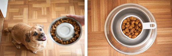 © Daily Dog Tag |dogfood in bowl, measure dog food Consistency is Key for #perfectweight