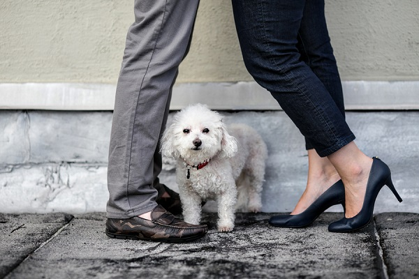 © Paw Prints| Pet Portraits by Charlene | dog and date night photos, Bichon Frise