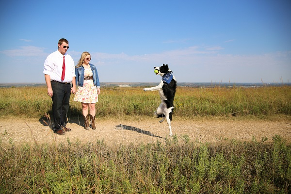 © Jamie K Photography | Border Collie catching tennis ball,  engagement pictures with BC