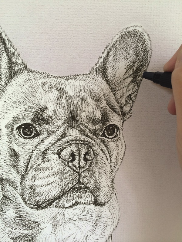 Frenchie in progress