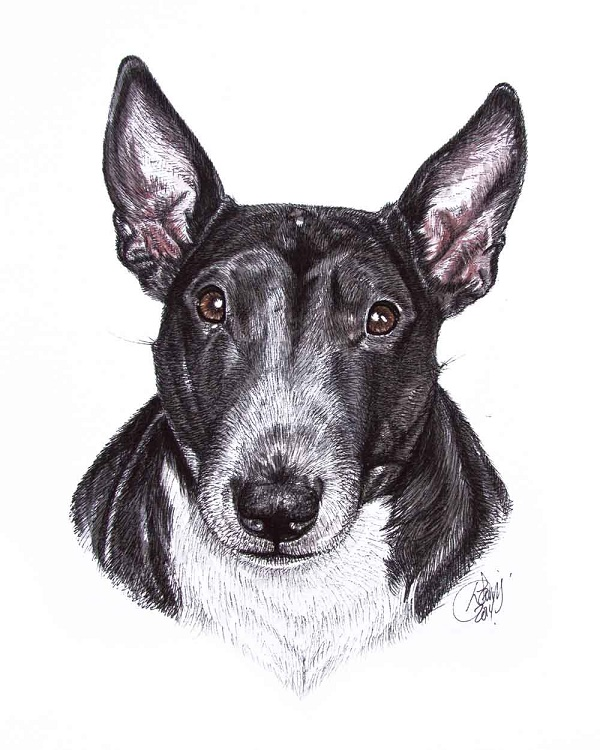 © Louise Jarvis | bull terrier, Louise Jarvis Art -The World of Dogs