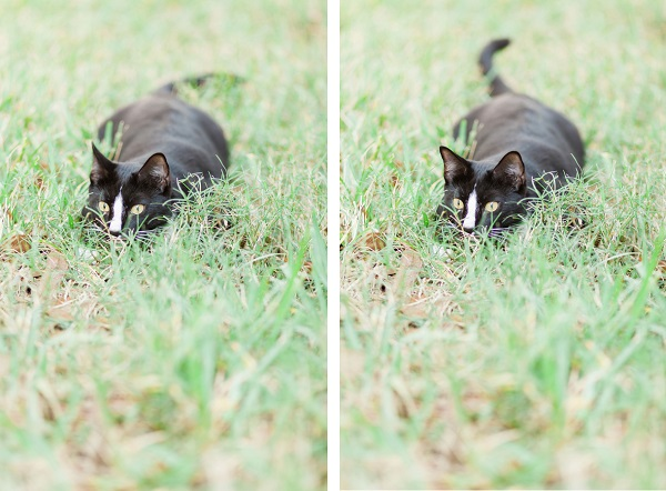© MIchelle Mock Photography | tuxedo-cat-in-grass