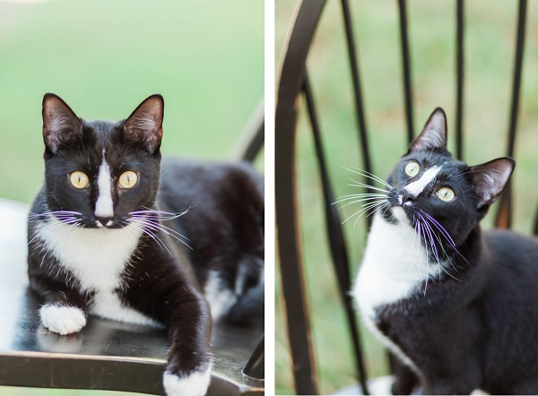 © MIchelle Mock Photography | tuxedo-cat-on-chair-outside