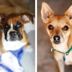 Adoptable dogs from Best Friends Animal Society
