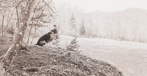 © Sweet Rocket Photography | Life as It should be, freed Beagle