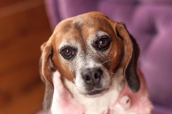© Sweet Rocket Photography | ex research lab Beagle