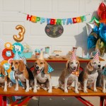 Beagle-birthday-party, best-in-show-theme
