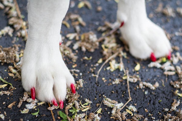 © AL Weddings Photography| painted-dog-nails