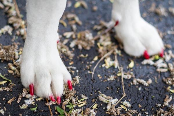 © AL Weddings Photography| painted-dog-nails