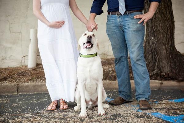 © AL Weddings Photography | maternity-photos-dog
