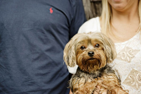 © Andie Freeman Photography  |country-engagement-photos-with-dog, Yorkie-mix, Maltese mix, Morkie