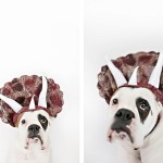 dog-triceratops-costume, dog-wearing-dinosaur-costume, Boxer