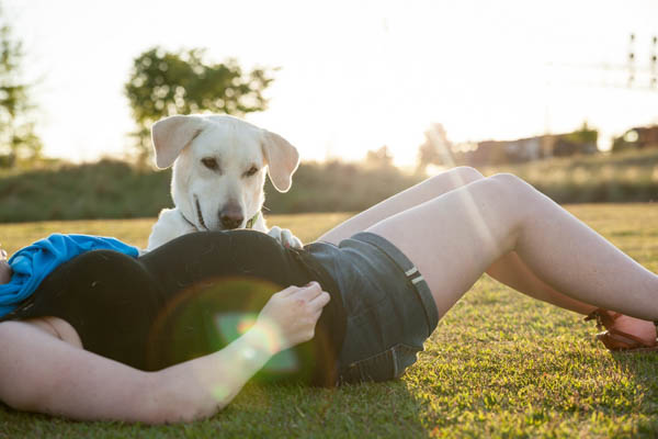 © AL Weddings Photography | maternity session + dog, Lab and baby-bump
