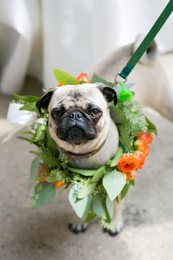 © Elena Bazini Photography | Pug, wedding dog, Pug wearing wreath orange flowers, bridal party pug, Margaret Thatcher the Pug