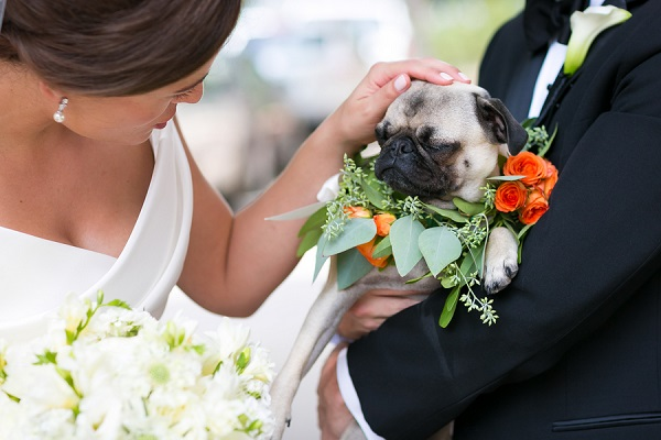 © Elena Bazini Photography  | Pug, wedding-dog, best-dog, wreath-for-dog, orange-flowers