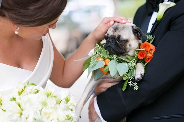 © Elena Bazini Photography  | Pug, wedding-dog, best-dog, wreath-for-dog, orange-flowers