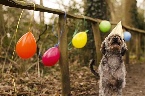 © Goblin Child | celebrating-dog-anniversary, balloons, party-hat-dog