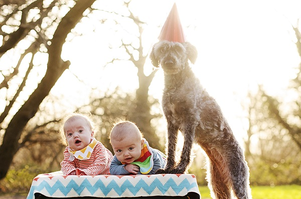 © Goblin Child |party-for-dog, twin babies-senior-dog, dog-party-hat