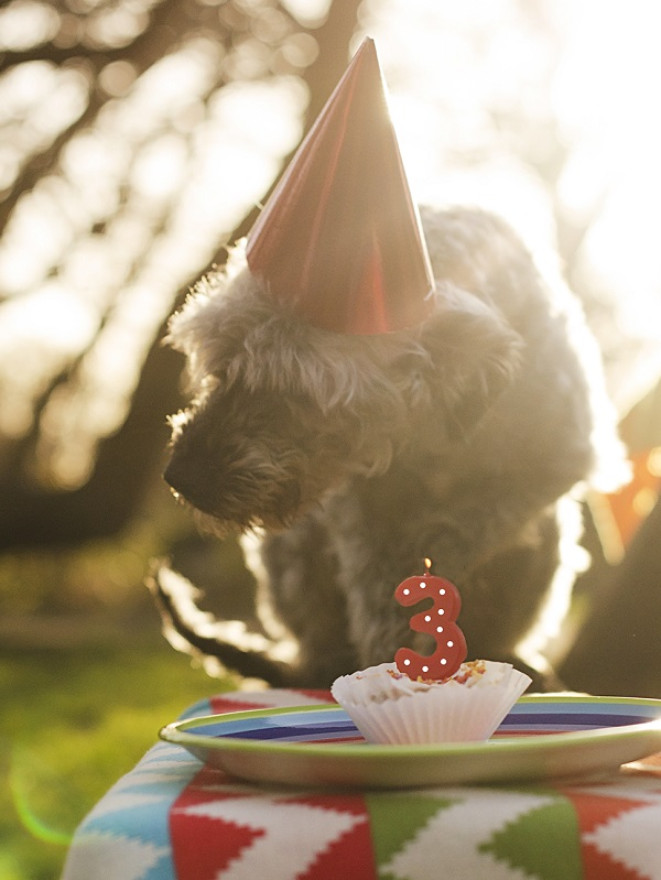 © Goblin Child | dog-pawty, party-for-dog, dog pupcake, 3 year anniversary dog