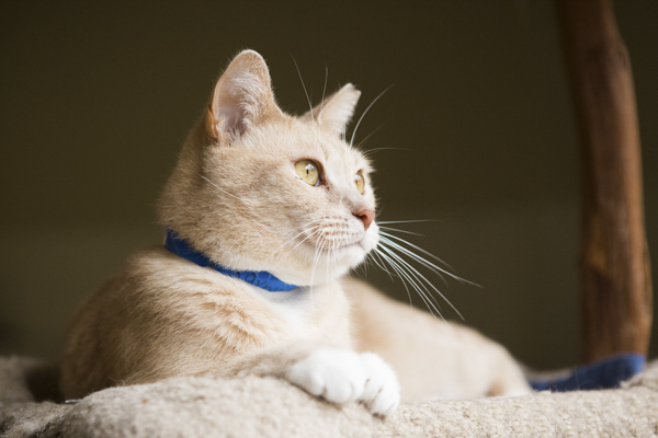 ©Lindsi Jones Photography | adoptable cat