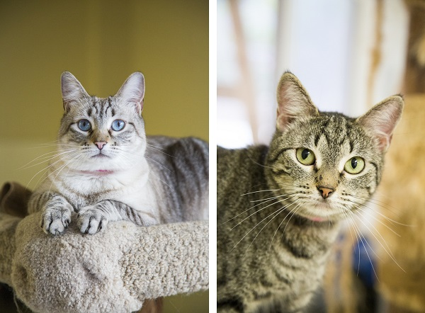 ©Lindsi Jones Photography | adoptable cats