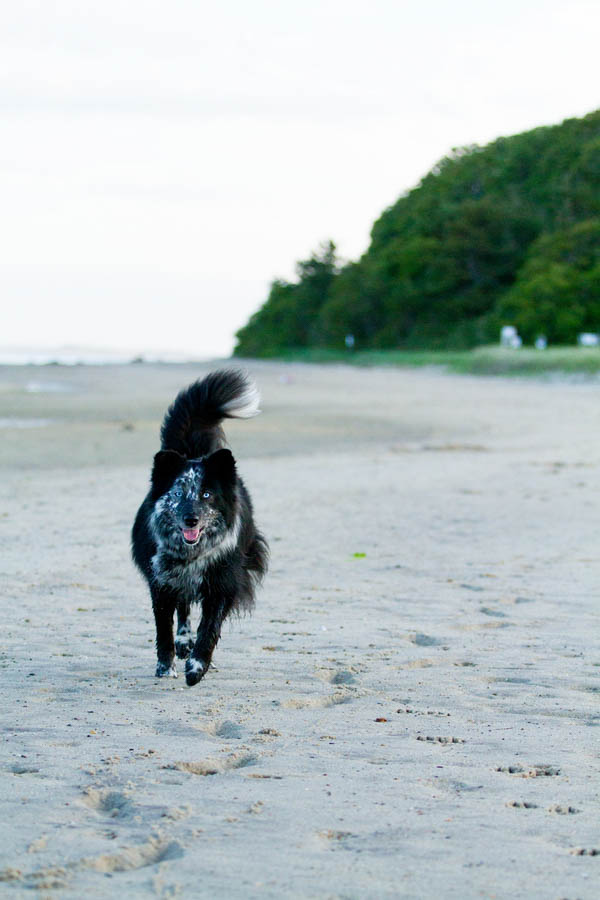 © Lydia Leclair Photography | dog-running-beach,