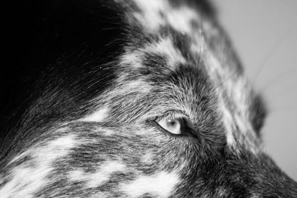 © Lydia Leclair Photography | Border-Collie-Cape-Cod-Beach, black-white-dog-portraits. spotted-BC