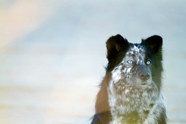 © Lydia Leclair Photography | rescued-Border-Collie-Cape-Cod-Beach