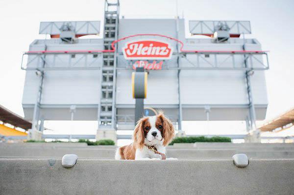 © Jenny Karlsson Photography | Cavalier puppy at Heinz field