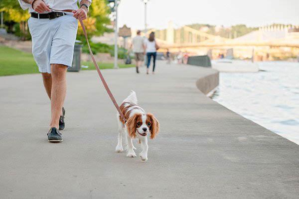 © Jenny Karlsson Photography | lifestyle-pet-portraits, King Charles Spaniel puppy