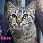 Adoptable-Cat