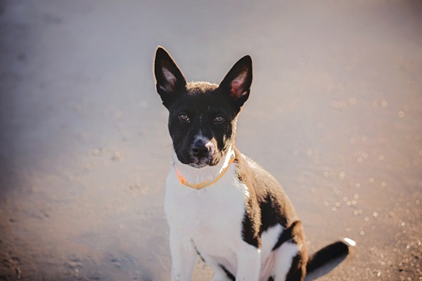 © Brooke Ashley Photography |lifestyle-family-puppy-photography, Savannah-on-location-dog-portraits, beach puppy